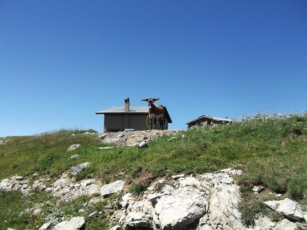 Un âne au Chalets du Fay, celle-là, c'est pour Idris !