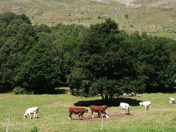 Le décor est plantée pour cette route pastorale !
