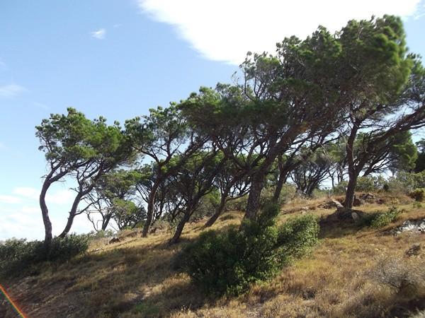 Le vent a sculpté la forme des arbres !