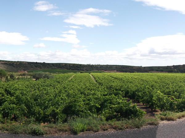 Retour dans la plaine du Roussillon avec ses vignes.